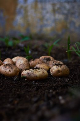 Potatosoil